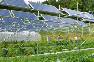Solar Panels for Greenhouse